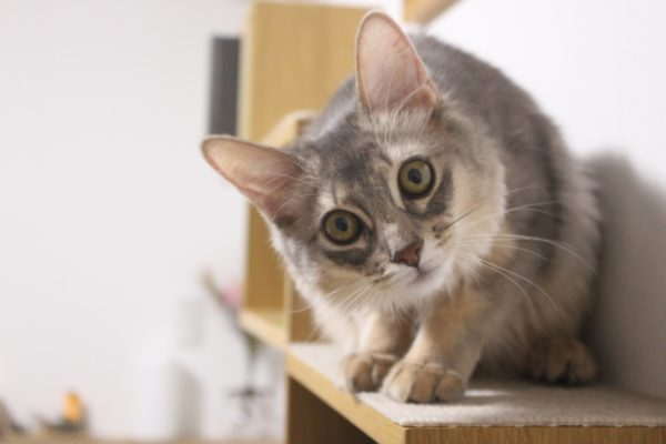 【キャンプ場あるある】どうしてキャンプ場にはネコがいるのか