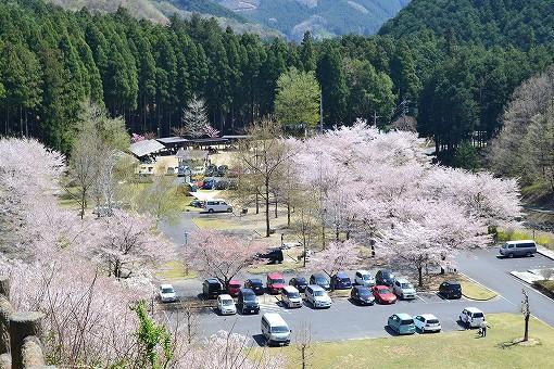 【保存版】関東・春キャンプおすすめスポット5選