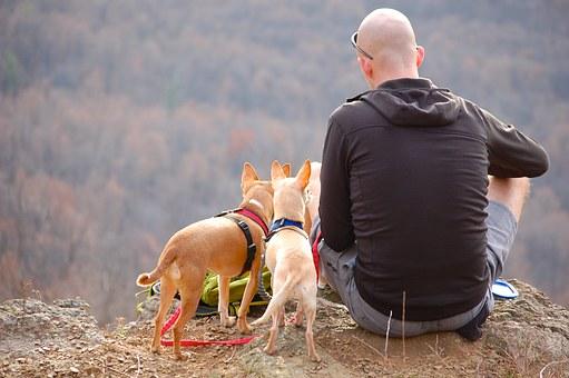 【保存版】愛犬とキャンプへ!夏キャンプでのペットの暑さ対策まとめ