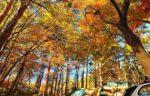 涼しくなった今!最強に秋を満喫できるキャンプ場まとめ