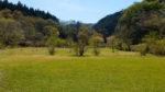 【写真付きレポ】伊豆自然村キャンプフィールドで子供と一緒に自然を遊び尽くす!