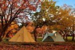 サイト別おすすめ!林間サイトで使うならこのテント!