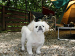 【愛犬も一緒に♪】全国各地のペット可キャンプ場まとめ