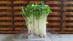 初心者でも簡単に家庭菜園!自家栽培した野菜でBBQを楽しもう
