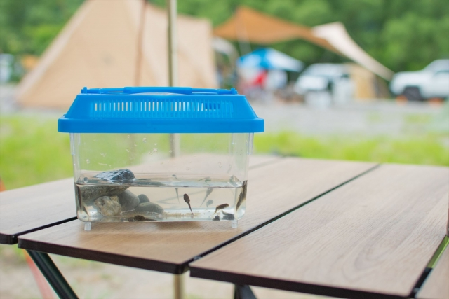 キャンプ 遊び イメージ