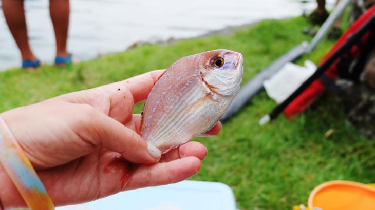 釣りキャンプ初心者必見!経験者がすすめる軽量でコンパクトな釣り用品5選